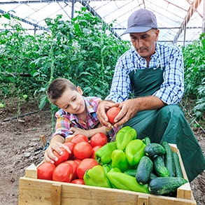 Farmer and son inspecting produce